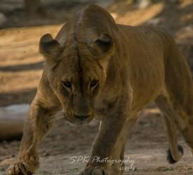 Kuwait Zoo Photo Walk